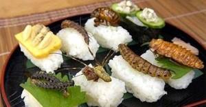 Novel food e insetti